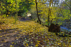 Den of Dun Walk. (Keith (foggybummer)) Tags: autumncolours leaves streampath tres walk woodland
