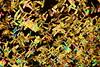 Witamin C in polarized light (Kamil Pluta photography) Tags: polarization polaryzacja mikroskop microscope microscopy biolar cristal cristalic