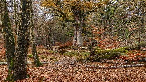 Treebeard - Baumbart