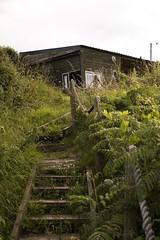 Untitled (amdav) Tags: wexford ireland house green plants grass