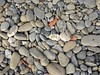 Just pebbles<>des galets. (France-♥) Tags: 2806 pebble vernazza cinqueterre italy minimalism galet rock caillou