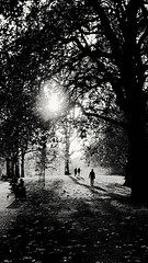 All you need is light (S Clark) Tags: stjamespark london londonparks parks light blackandwhite autumn november atmosphere atmospheric mood noir canon canonpowershotg12 britain england uk shadow