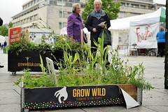 GrowWildStall_31_Fotonow (FOTONOW (CIC)) Tags: city flowers wild people kew gardens square community stones centre grow seed plymouth seeds stepping council guildhall