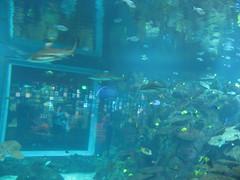 IMG_4588 (Whitebrowgigs) Tags: flowers fish animals shark turtle tiger polarbear toledozoo turtles tigers sharks polarbears orang orangutans orangs thetoledozoo