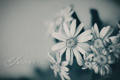 Forever ... (Sunny_mjx) Tags: happy mono moody sad joy forever moment moods