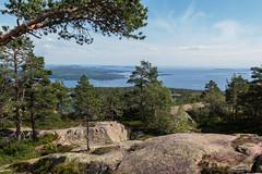 Au sommet (sosivov) Tags: mountain forest landscape nationalpark sweden högakusten skuleskogen highcoast slåttdalsberget