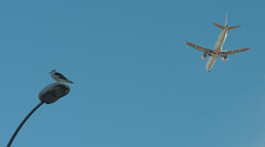 Is it a bird? Is it a plane? No, it's both! (rich01535) Tags: city blue sky bird portugal plane 50mm flying nikon lisbon aircraft aeroplane d90