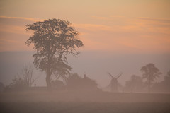 Silhouettes in the mist