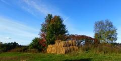 Fall...L'automne (anng48) Tags: canada fall automne quebec stlaurent qc iledorlean
