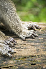 "Patitas (_Galle_) Tags: republica park miguel angel photography monkey mono photo asia republic foto photos south kerala national fotos sur macaco fotografia galle hindu hinduism fotógrafo hindi thekkady periyar fotografía photograper simio gallego inidia भारत periyarnationalpark hindou republicofindia hindú ""republic hinduismo भारतगणराज्य गणराज्य gaṇarājya cheral bhārat bhāratgaṇarājya miguelagallego miguelgallego miguelangelgallego repíblicadelaindia cheralam"