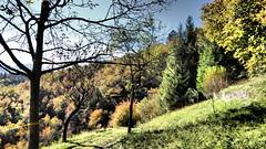 Malegno 6 (sandra_simonetti88) Tags: italien italy fall forest italia herbst autunno lombardia italie bosco valcamonica vallecamonica malegno