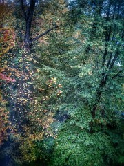 Georgia Fall Colours 2015 (ThePolaroidGuy [CensoredϟRestricted]) Tags: november trees color fall leaves forest georgia landscape ed colours outdoor pov availablelight naturallight edward tall elevated drake elevation hdr kennesaw masterphotographer 2015 edwarddrake edwarddrakemfa thepolaroidguy