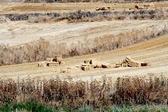 tras la cosecha (M. Martin Vicente) Tags: de campos pacas castilla