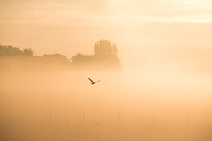 Flying in the mist