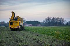 IMG_9874 (Bad-Duck) Tags: vinter mat ropa hst ker betor kvll skrd flt jordbruk lantbruk rstid livsmedel sockerbetor fltarbete livsmedelsproduktion betupptagare