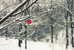 Happy Holidays (Matt Champlin) Tags: life christmas winter red holiday snow home nature canon festive fun outdoors holidays colorful pop snowing 2015 skaneateles 2013 christmasornamentoutdoors