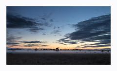 Misty. (47mki) Tags: mist dawn tree light canon760d 18135stm strensallcommon