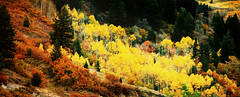 Big Cottonwood Canyon Colors 10 2 2016-7029 (houstonryan) Tags: ryan houston houstonryan october 2 2016 utah utahn based photographer photography photogrpah print art photograph utanh picture big cottonwood canyon glacial fun texutre autumn fall pretty leaves leaf drive driving scenic byway