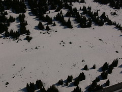 Willmore Wilderness Park (Alberta Parks) Tags: willmore wilderness area snow forest trees pine vast aerial willmorewildernesspark protectedarea alberta backcountry ice