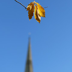 FallMonday (Andrew Malbon) Tags: autumn autumncolour chichester westsussex leaves colour fall leica leicam9 m9 90mmf2 90mm summicron shortdepthoffield shorttelephoto handheld blue yellow
