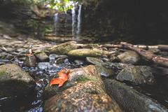 the fall (Marc McDermott) Tags: fall autumn leaf red orange hilton falls halton conservation milton ontario canada nature rocks water forest beautiful peaceful solitude
