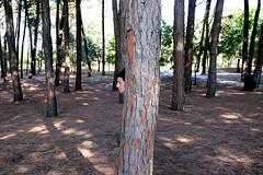 mammalbero (miriam.lonardi) Tags: fujifilm fujifilmxt10 fuji fujinon fujinonxc1650mm mamma alberi pineta pinarelladicervia cervia faccia metamorfosi