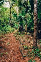 Spring Hammock Preserve (corran105) Tags: springhammockpreserve woods jungle forest outdoor nature landscape vsco vscofilm florida centralflorida orlando sanford hiking