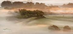 Autumnal Pastures (http://www.richardfoxphotography.com) Tags: denbury sunrise mist misty fog cattle cows horse pasture fields devon