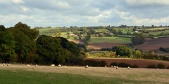 Wardley Landscape (AndyorDij) Tags: wardleyinrutland wardley wardleyhill kingshill england rutland uk unitedkingdom 2016 fields hedgerow sheep church autumn trees tree landscape