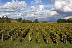 La mme en mieux, une visite chez l'oculiste s'impose. (bihain.claude) Tags: nature paysages bourgogne vignes