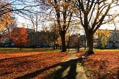 Autumn Shadows (acwills2014) Tags: bristol clifton autumn colour color leaves shadows light bright treesilhouette