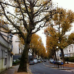 (rileyo) Tags: london england uk nottinghill autumn trees