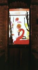Flamingo Window (WatermelonHenry) Tags: flamingo windows window brickwall wall windowframe abstract sureal inflatable pink bird tropical wales towyn seaside lampshade cactus wood door woodendoor redbrick bricks lights light decorative pinky