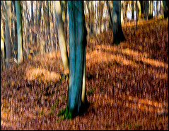 20161112-034 (sulamith.sallmann) Tags: landschaft pflanzen annatal autumn blur brandenburg bume deutschland forest germany herbst herbstlaub landscape mrkischoderland natur nature plants strausberg trees unscharf unschrfe wald deu sulamithsallmann