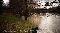 Torino (40) (cattazen.com) Tags: alluvione torino po esondazione parcodelvalentino murazzi pienadelpo cittditorino turin piemonte