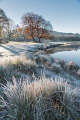 (John Ormerod) Tags: winter frost hoar ice river cold freezing frosty lakedistrict tree grass landscape light morning
