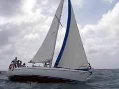 250-DSCN9877 (eric15) Tags: sea beach water race cat for boat eva surf sailing wind offshore sailors luna aruba international dash sail regatta sailor optimist sunfish oranjestad surfside