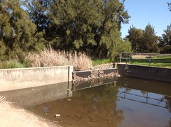 The filtration pond (spelio) Tags: canberra act walking roaming landscapes creek riparian stroll ginninderracreek australia 2015 oct ngunnawal walk 2913 australiancapitalterritory dam plastic rubbish