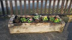 (celicom) Tags: flores madera flora jardin tierra jardinera