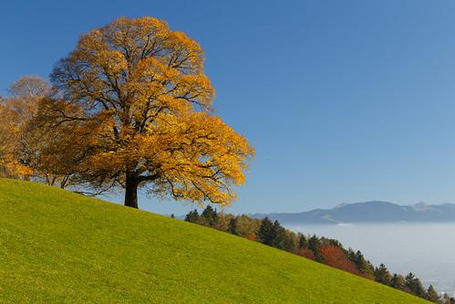 Brilliant fall foliage above foggy valleys