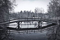 Le Pont (Lune Shadows (Larry Williams)) Tags: trees lake water reeds evening