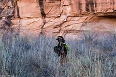 Chai (CCBImages) Tags: utah us unitedstates hike moab negrobillcanyon 2015ccbimagescom
