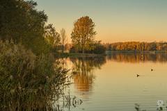 2015-11-01_Q8B4006 © Sylvain Collet.jpg (sylvain.collet) Tags: autumn france nature automne sur marne vairessurmarne vaires