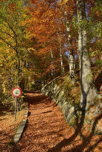 chemin dans la nature luxuriante