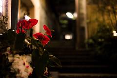 the Christmas season at Kagurazaka backstreet (Mototaka Tsujima) Tags: christmas street winter japan night 50mm tokyo nikon view 日本 東京 f18 冬 クリスマス kagurazaka 夜 神楽坂 d610 ストリート