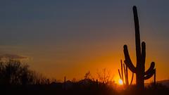 tramonto con Saguari (adzamba) Tags: sunset arizona cactus usa tramonto unitedstates tucson saguaro 2015 wmanvillerd