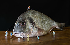 A fish in Lilliput (miciagilda) Tags: fish men gulliver micro piccolo pesce orata uomini lilliput