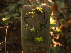 Populated carving (Bushman.K) Tags: pole moss lichen carving
