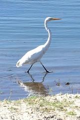 Birds along the zambezi (dw*c) Tags: bird birds zambezi zambeziriver animal trip travel nokn picmonkey