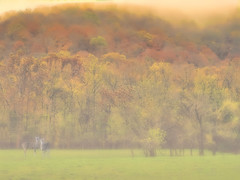 fog (boriches) Tags: deer mountains ozark arkansas autumn